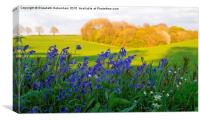 Bluebells on the verge with woodland view, Canvas Print