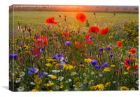 Wild Flowers in a July Sunset., Canvas Print