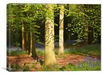Beech Woodland Canopy with leafy shadows , Canvas Print