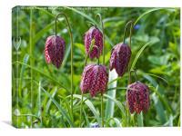Snakeshead Fritillary Flowers , Canvas Print