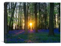 That Magic Moment in the Bluebell wood, Canvas Print