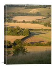 The Whipsnade Lion Viewed from Ivinghoe., Canvas Print