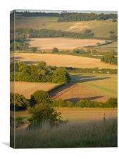 Portrait view of Whipsnade in the Evening light., Canvas Print