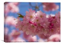Romantic Spring blossom, Canvas Print