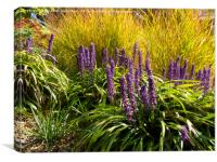 Blue Liriope Muscari flowers and Green Grasses., Canvas Print