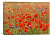 Poppies and grasses, Canvas Print