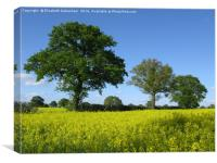 Green Oaks and Yellow Oilseed rape in full bloom, Canvas Print