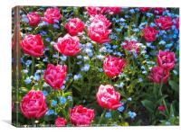 Pink Tulips and Blue Forget me Nots, Canvas Print