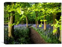 Chiltern Bluebells Watercolour Effect, Canvas Print