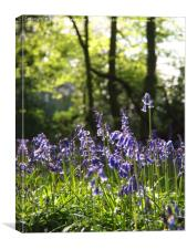 Bluebells with Ivy Clad Trees, Canvas Print