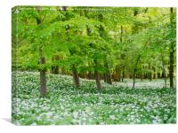 Wild Garlic Woodland, Canvas Print