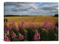 Rosebay Willowherb by a cornfield, Canvas Print