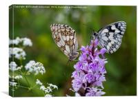 Mr and Mrs Marbled White on a Spotted Orchid, Canvas Print