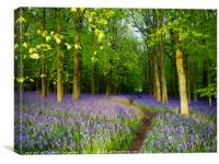 Bluebell wood heaven, Canvas Print