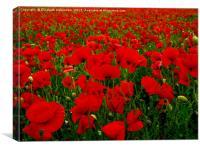 Red Poppy Field, Canvas Print