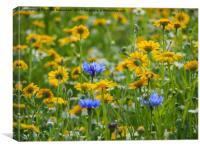 Yellow Corn Marigolds with Blue Cornflowers, Canvas Print