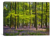 A May Evening in the Bluebells, Canvas Print