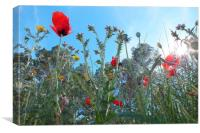 Poppies & wild flowers, Canvas Print