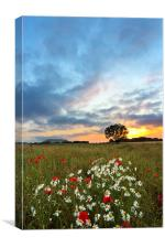 Sunset Poppies, Canvas Print