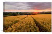 Golden Cornfield, Canvas Print