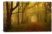 Misty Autumn Woods, Canvas Print