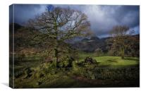 Cumbrian Mossy Tree, Canvas Print