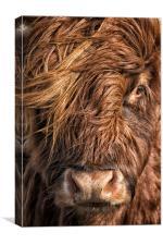 Highland Cow, A Portrait, Canvas Print