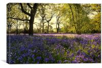 Bluebells and the Light, Canvas Print