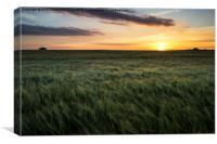 Cornfield Sunset, Canvas Print