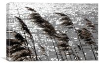 Reeds on the Water, Canvas Print