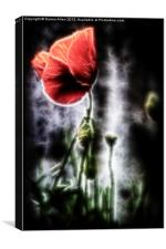 Electric Poppy, Canvas Print