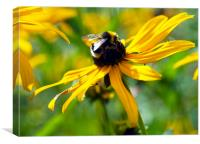 Bee pollen gathering, Canvas Print