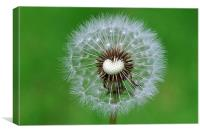 Perfect dandelion, Canvas Print