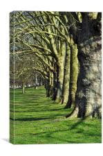 Symmetrical trees, Canvas Print
