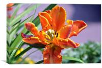Vibrant orange flower, Canvas Print