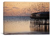 Starlings    , Canvas Print