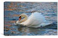 Cute swan in the river, Canvas Print