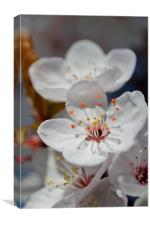 Lovely blossoms, Canvas Print