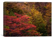 Tree Color, Canvas Print