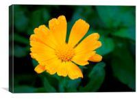 Hoo, Kent, Yellow Flower, Canvas Print