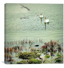Hoo Marina, Swans, Canvas Print