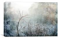 Scandinavian Light, Canvas Print