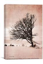 Western Wind, Canvas Print