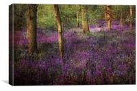 A Simple Woodland Tale, Canvas Print