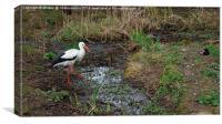 White Stork, Canvas Print