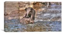 Playing Baby Elephants , Canvas Print