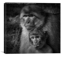 Cheeky Monkey Black And White , Canvas Print