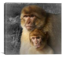 Cheeky Little Monkey, Canvas Print