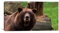 Max The Brown Bear, Canvas Print
