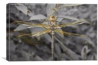 Golden Dragonfly, Canvas Print